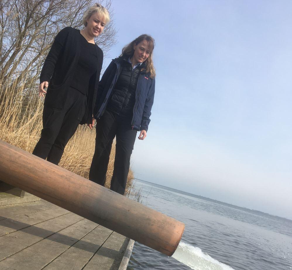 havørred fyn udsæltning smolt jane jegind odense fjord å havørred sea trout zeeforel meerforelle sjøørret