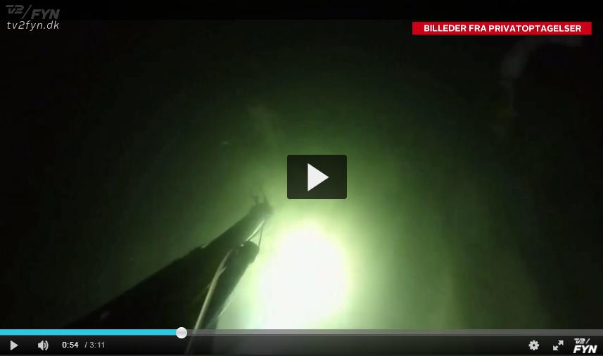 havørred UV jagt undervandsjagt fiskeri Fyn